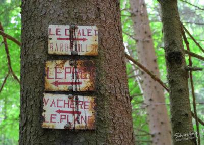 2018-05-27-foret du Cuchet (2)